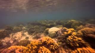 dhaban corals