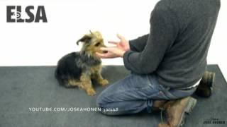 خدع سحرية للحيوانات الأليفة | يوروماكس