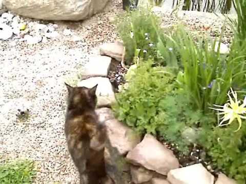 Wiosna wokół domu 2009