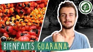REMPLACER LE CAFÉ avec le GUARANA (Substitut Naturel)