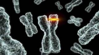The Origin of Genes