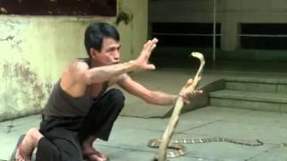 De la vipère au cobra, les tueurs silencieux de Birmanie