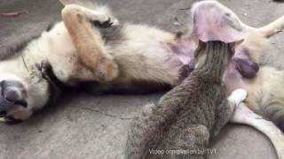 Wow! Cat Mating Dog