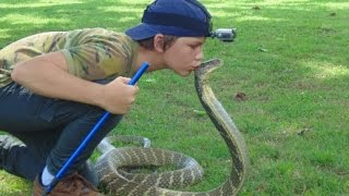 Deadly KING COBRA attack and kiss on head  - HD