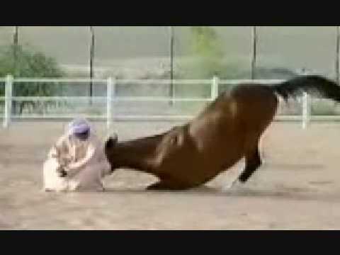 The Loyalty of Arabian Horses Desert Kings