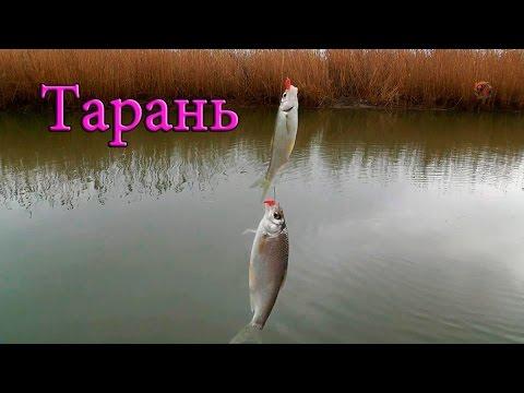 ловля плотвы весной киев