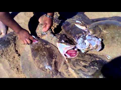 pesca d lenguado maldonado .mp4
