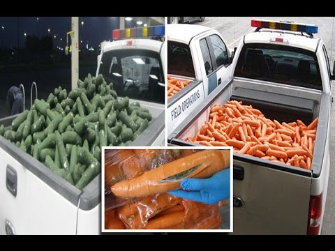 Drug smugglers busted after more than a ton of drugs disguised as CARROTS