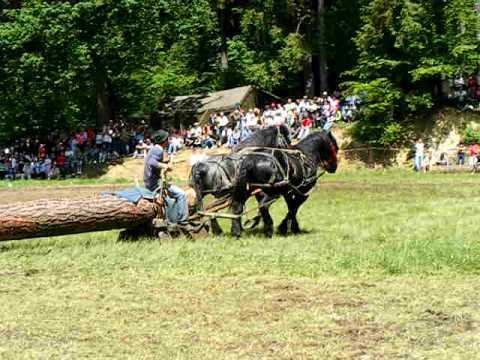 caii lui Alexandru Veleanu rasnov