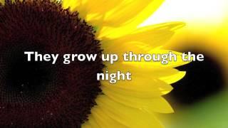 Sunflower song lyrics