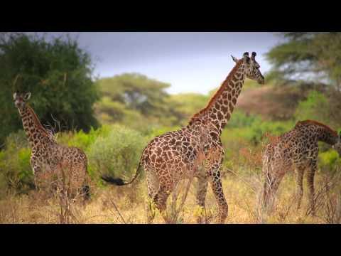 Xxx Mp4 Tanzania Tourism Unforgettable Tanzania 3gp Sex