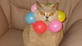 Cats Playing With Balloons Compilation