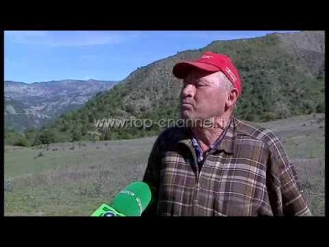 Një histori e rrallë në malet e Shqipërisë Top Channel Albania News Lajme