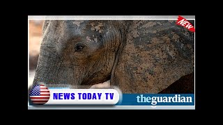 Trump postpones decision on allowing import of elephant parts  NEWS TODAY TV
