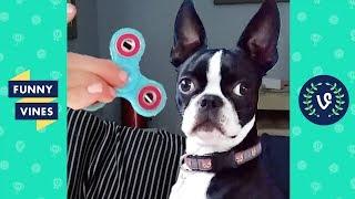 FIDGET SPINNERS vs. PETS Compilation 2017 | Funny Vines Videos