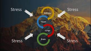 Webinar – Mountain Lab: Studying the effects of stress and extreme conditions on human physiology