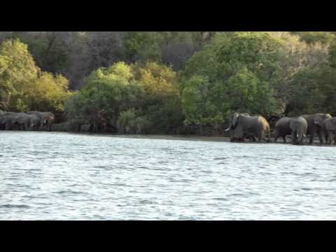 Xxx Mp4 Elephants Spotted From The African Queen 3gp Sex