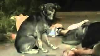 وفاء الكلاب قد يجعلها تصل الى مراتب اعلي من بعض البشر شاهد واحكم