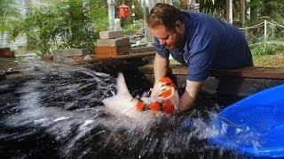 $60,000 Japanese Koi Fish