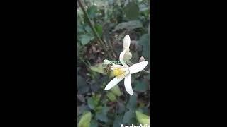 ফুলের পরাগায়ন. Flower of pollen.fuler poragayon