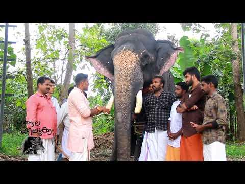 Xxx Mp4 Kerala Elephant Mouttath Rajendran CHANGALA KILUKKAM 3gp Sex