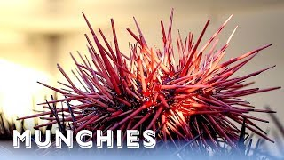 Sea Urchins Are California Gold: Hunter Gatherer