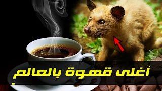 أغلى قهوة في العالم !!