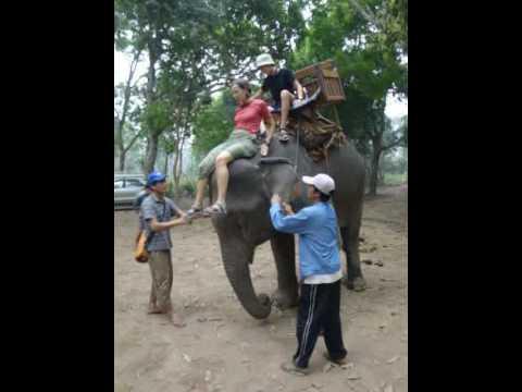 Xxx Mp4 Lisette Queen Of Elephants 3gp Sex