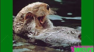 THE CUTEST OTTER EVER!
