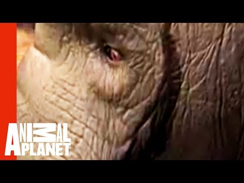 Untamed and Uncut Elephant Rampage in India