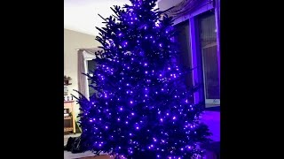 How to Install Christmas tree lights - purple 5mm