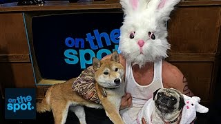 2 DOGS, 1 RABBIT - On The Spot #92