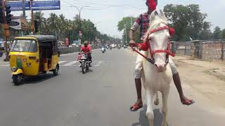 Vellore horse 9944928426 schools coching