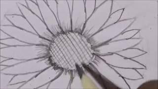 Draw Step-by-Step sketch Sunflower Easy Drawings | Sketching Tutorial