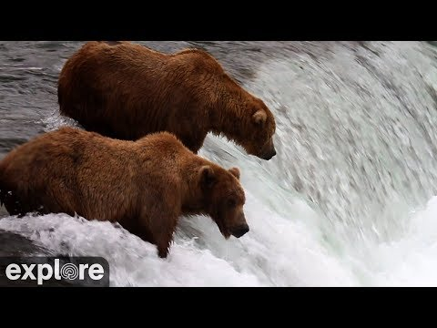 Brooks Falls Katmai National Park Alaska powered by EXPLORE