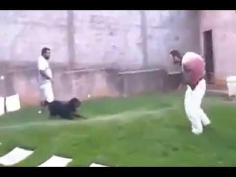 rottweiler ataca a un hombre con toda la furia ¡¡
