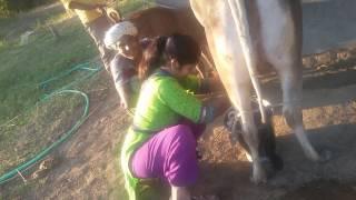Ramila Margi Mom Cow Milk collecting
