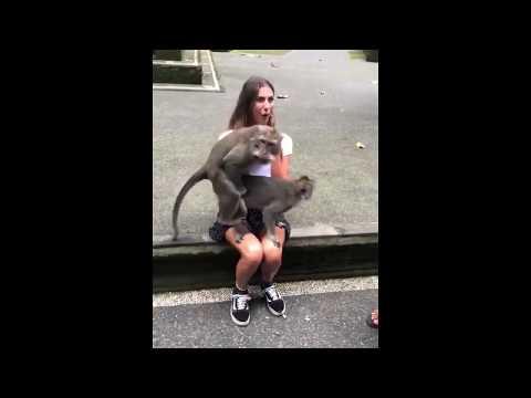 Monkeys sex on cute girl