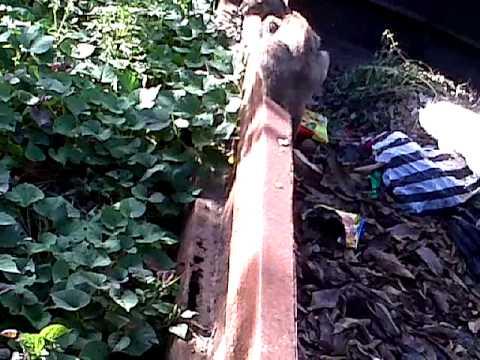 anak sma mesum di hutan