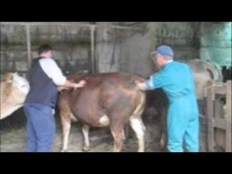 Xxx Mp4 Cow Fisting 3gp Sex