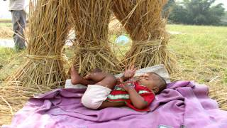 An Indian Rice Harvest: A Story from the 1,000 Days
