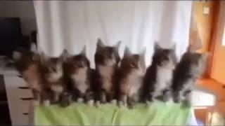 Video engraçado,  hoje e sexta feira