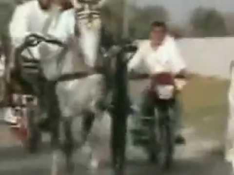 Xxx Mp4 SAAJAN HORSE ZAHID RAFIQ TANAG MAKER RAWALPINDI 3gp Sex
