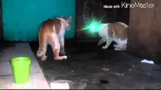 Kucing perang suara