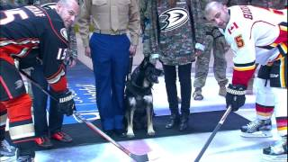 Gotta See It: Bomb sniffing dog drops ceremonial puck