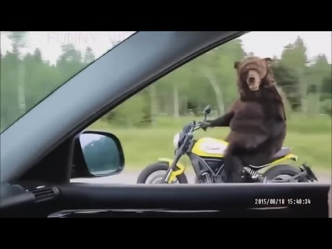 Best Funny videos of the world №5 #COOL