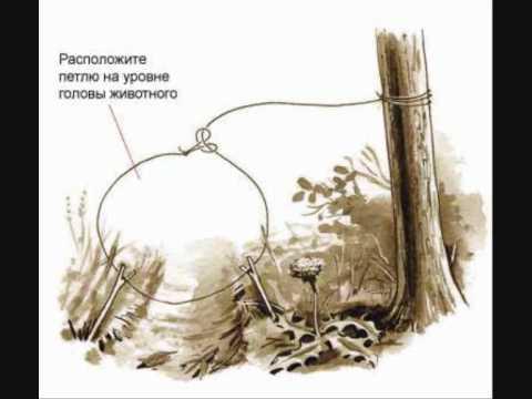 Ловля зайца на капканы: совет 1: как ставить капкан на зайца