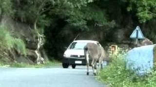 Animals death in Accident