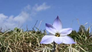 【二部合唱】花は咲く【歌詞付き】