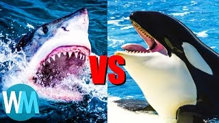 Top 10 SAVAGE Animal Rivalries